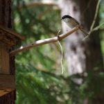 Bird / Vták